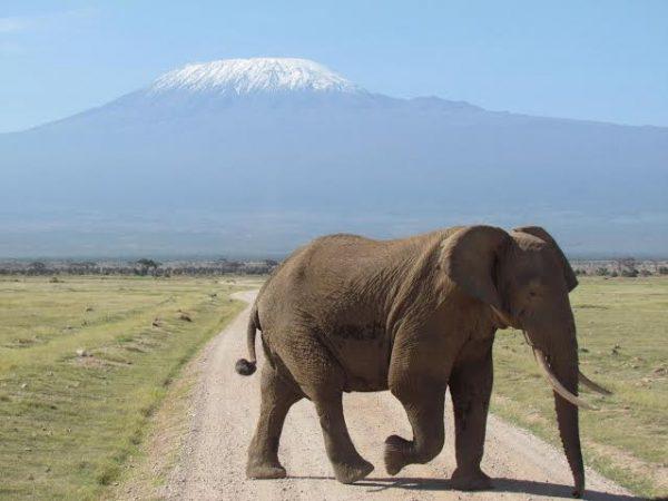 Tours of Tarangire Serengeti and Ngorongoro