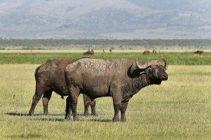 Manyara Serengeti & Ngorongoro 4 DAYS & 3 NIGHTS
