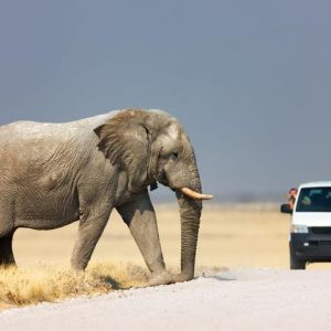 Kenya best wildlife safari