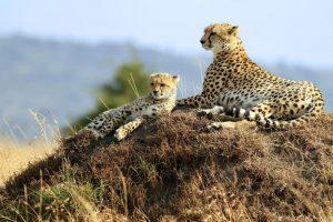 Tarangire, Lake manyara, Serengeti & Ngorongoro
